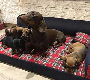 cucce per cani da interno baldiflex