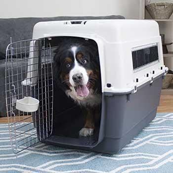 trasportino cani 3