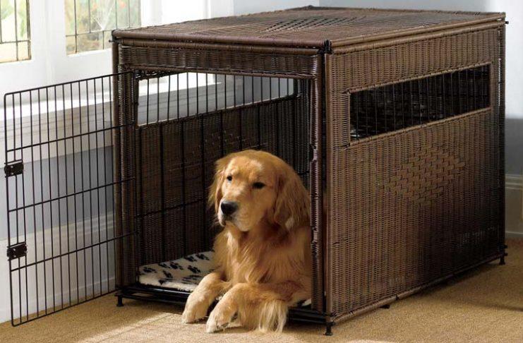 trasportino cani migliori