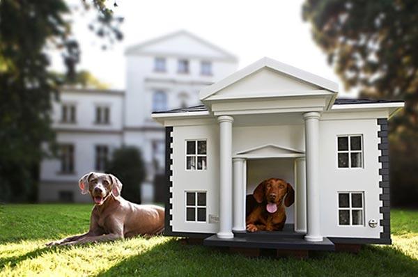 Cucce Per Cani Moderne.Cuccia Per Cani Da Esterno La Top 5 Guida Test E