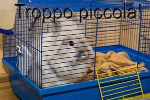 gabbia conigli 4