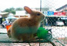 gabbia conigli cop