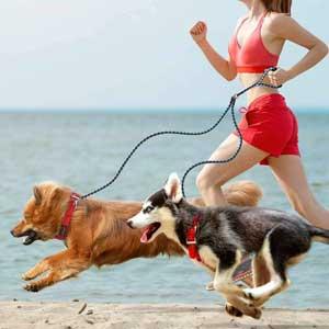 guinzaglio per cani doppio
