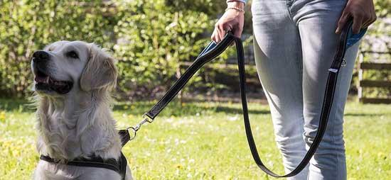 guinzaglio per cani fisso happyflax