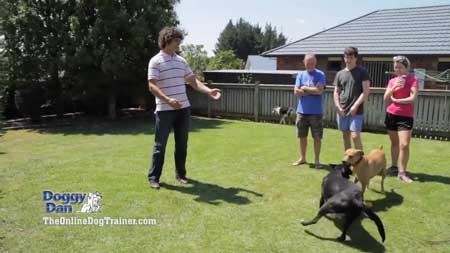 addestrare cane corso online dog-trainer