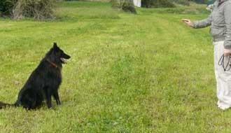 come addestrare cane resta