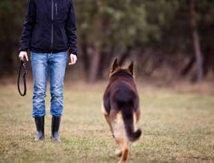 come-addestrare-cane-tornare