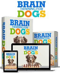 corso addestramento cani brain training-4dog