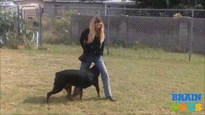 corso-addestramento-cani-brain-training-4dog