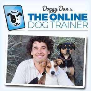 corso online dog-trainer