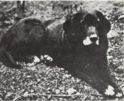 labrador-prima fotografia