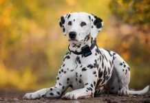 migliore localizzatore gps-per-cani