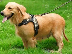 pettorina cani jogging