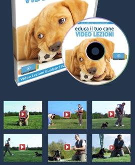 addestramento cani corso online