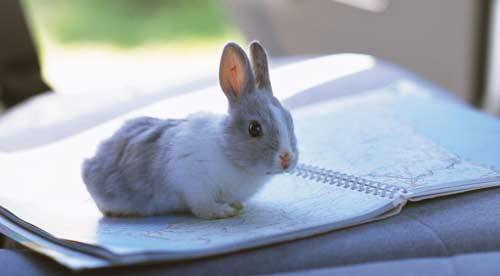 animale da compagnia coniglio
