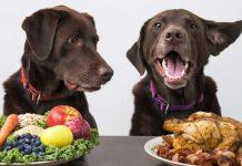 cibo per cani economico cop