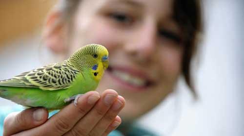 pappagalli-animali-domestici