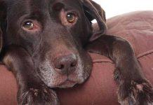 integratori cani per articolazioni cop