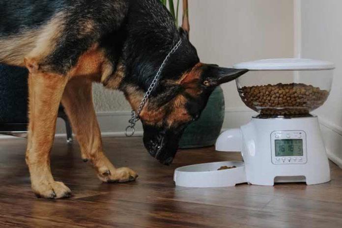 migliore dispenser cibo cani gatti