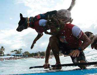 EzyDog salvagente per cani