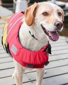 giubbotto salvagente cani economico bella&balu