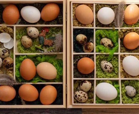 migliore incubatore uova cop