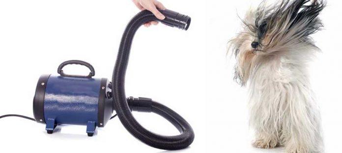 migliore soffiatore per cani cop