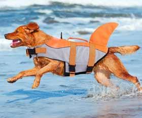 salvagente cani squalo citetoile